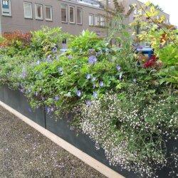 Lippenstift voor de Stad - Hangende Tuinen