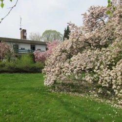 Cultuurherberg met tuin 3